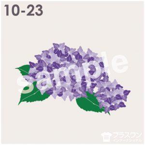 紫陽花(アジサイ)のイラスト素材